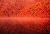朝日に照らされる紅葉の桧原湖
