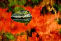 紅葉の映える水面