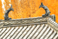 秋の足利学校孔子廟