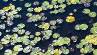 池の水面 11023014742| 写真素材・ストックフォト・画像・イラスト素材|アマナイメージズ