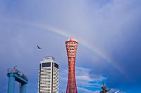 神戸ポートタワーと虹 11023017372| 写真素材・ストックフォト・画像・イラスト素材|アマナイメージズ