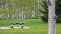 ベンチと芝生とタンポポ 11023018419| 写真素材・ストックフォト・画像・イラスト素材|アマナイメージズ