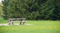 ベンチと芝生とタンポポ
