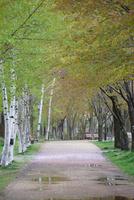 桜の花びらの落ちた公園の道