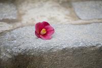花びら 11023018990| 写真素材・ストックフォト・画像・イラスト素材|アマナイメージズ