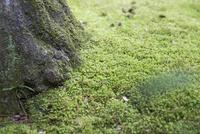 木と苔 11023019107| 写真素材・ストックフォト・画像・イラスト素材|アマナイメージズ