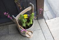 店の軒先の花壇