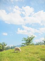 羊のいる風景