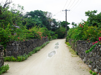 竹富島の道 11023020515| 写真素材・ストックフォト・画像・イラスト素材|アマナイメージズ