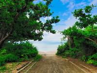 ビーチへ続く道 11023020516| 写真素材・ストックフォト・画像・イラスト素材|アマナイメージズ