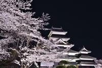 桜咲く松本城