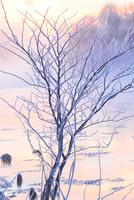 冬の風景 11023020563| 写真素材・ストックフォト・画像・イラスト素材|アマナイメージズ