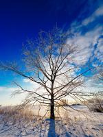 冬の風景 11023020578| 写真素材・ストックフォト・画像・イラスト素材|アマナイメージズ