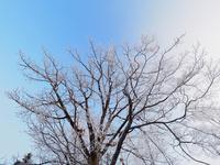 冬の風景 11023020597| 写真素材・ストックフォト・画像・イラスト素材|アマナイメージズ
