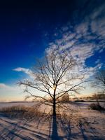 冬の風景 11023020599| 写真素材・ストックフォト・画像・イラスト素材|アマナイメージズ