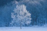 樹氷 11023020623| 写真素材・ストックフォト・画像・イラスト素材|アマナイメージズ