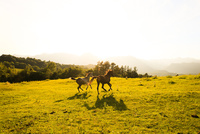 北海道の馬 11023021096  写真素材・ストックフォト・画像・イラスト素材 アマナイメージズ