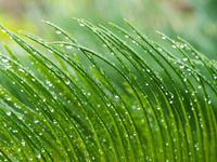 野草と雨 11023021185| 写真素材・ストックフォト・画像・イラスト素材|アマナイメージズ