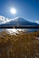 山中湖のススキと富士山 11023021694| 写真素材・ストックフォト・画像・イラスト素材|アマナイメージズ