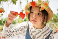 イチゴ狩り 11023021716| 写真素材・ストックフォト・画像・イラスト素材|アマナイメージズ