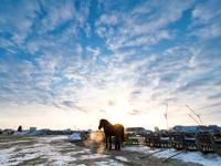 冬の競馬場 11023021762| 写真素材・ストックフォト・画像・イラスト素材|アマナイメージズ