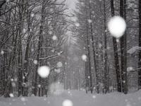 雪の日の林 11023021850| 写真素材・ストックフォト・画像・イラスト素材|アマナイメージズ