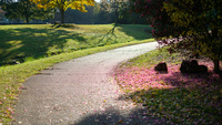 公園の道 11023021962| 写真素材・ストックフォト・画像・イラスト素材|アマナイメージズ