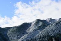 冬の木々と青空 11023022036| 写真素材・ストックフォト・画像・イラスト素材|アマナイメージズ