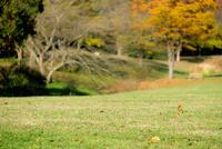 公園の芝生 11023022136| 写真素材・ストックフォト・画像・イラスト素材|アマナイメージズ