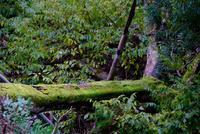 苔の樹木 11023022155| 写真素材・ストックフォト・画像・イラスト素材|アマナイメージズ