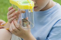 Boy looking at toad in terrarium, cropped