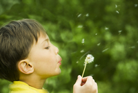 Boy blowing dandelion seedhead