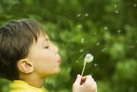 Boy blowing dandelion seedhead