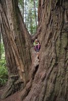 Girl sitting on base of giant tree trunk, Redwood National Park, California, USA