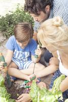 Little boy helping his parents work in vegetable garden 11025009774| 写真素材・ストックフォト・画像・イラスト素材|アマナイメージズ