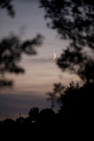 Crescent moon viewed through trees at twilight