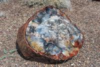 Petrified wood 11025010471| 写真素材・ストックフォト・画像・イラスト素材|アマナイメージズ