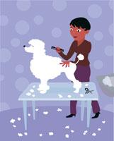 Woman grooming poodle