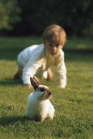Boy chasing rabbit in garden 11027004092  写真素材・ストックフォト・画像・イラスト素材 アマナイメージズ