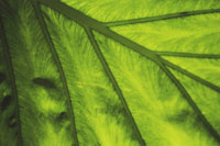 Close up of leaf structure