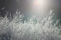 Plants growing in winter 11029000564| 写真素材・ストックフォト・画像・イラスト素材|アマナイメージズ