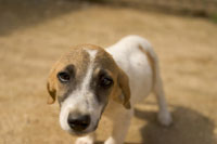 Close up of sad puppy