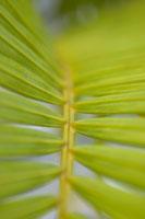 Close up of branch spine 11029000600| 写真素材・ストックフォト・画像・イラスト素材|アマナイメージズ