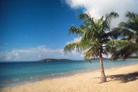 Palm tree on beach 11029001659| 写真素材・ストックフォト・画像・イラスト素材|アマナイメージズ