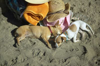 Dogs sleeping on beach