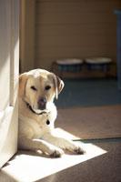 Dog sitting by door