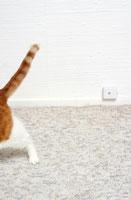 Cats hind leg on carpet