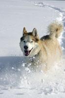 Dog running down snowy hill
