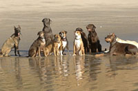 Dogs sitting on beach