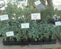 Herbs for sale 11029004546| 写真素材・ストックフォト・画像・イラスト素材|アマナイメージズ